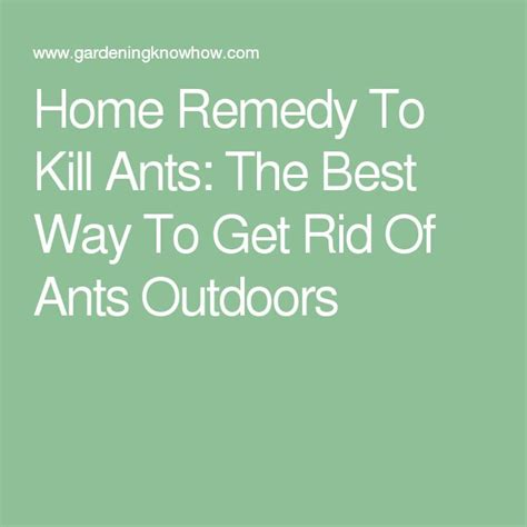 home remedy to kill ants the best way to get rid of ants