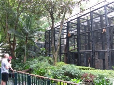 Hk Zoological And Botanical Garden Panel Urges Major Rev Of Hong Kong Zoological And Botanical Gardens Australasian Leisure