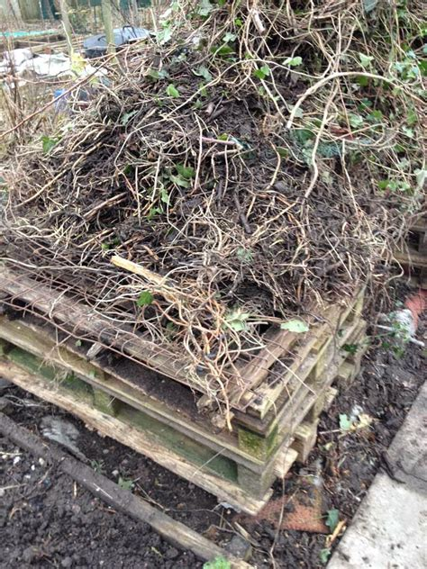 couch grass rhizome allotment garden the way i get rid of couch grass elymus
