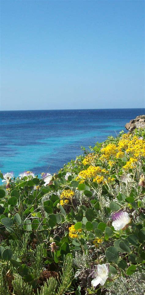 favignana turisti per caso i colori della natura di favignana viaggi vacanze e