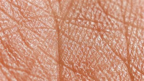human skin texture macro stock photo 293974619 human skin macro stock photo image of care 55342084