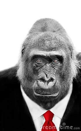 gorilla in suit and tie stock image image: 12594811