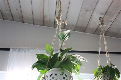 How To Hang Plants From Ceiling by Enjoy It By Elise Blaha Cripe More Hanging Plants In The