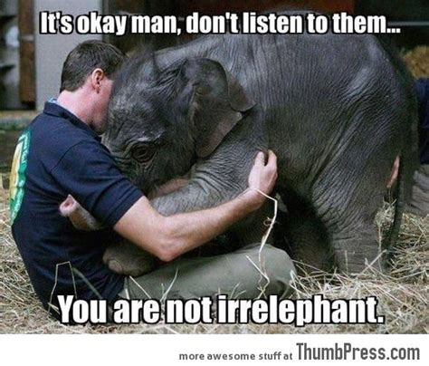 Baby Elephant Meme - comforting a baby elephant