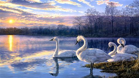 wallpapers hd widescreen painting national swans painting widescreen wallpapers hd free