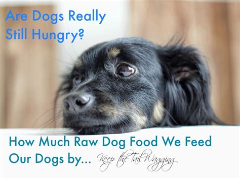 how much food to feed a puppy how much food to feed dogs keep the wagging