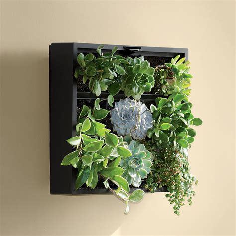 green wall decor living art green wall tabletop planter the green head