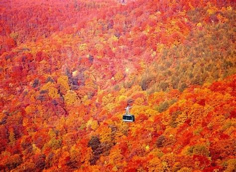 why leaves turn color in the fall summary of why leaves turn color in the fall essay 560 words