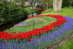 Flowers Of Netherlands - image gallery netherlands flowers