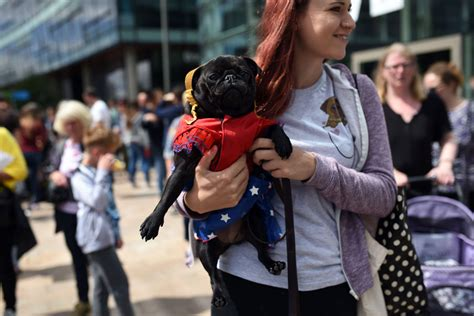 pugs their owners pug dogs and their owners arrive at pugfest manchester