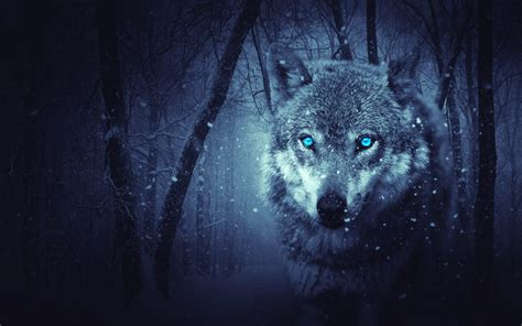 wallpaper wild wolf blue eyes scary snowfall winter