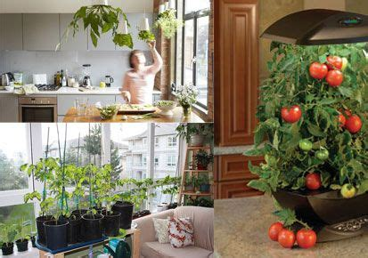 small indoor vegetable garden indoor vegetable gardening