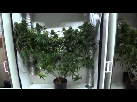 indoor closet grow growing marijuana indoors megamarijuana