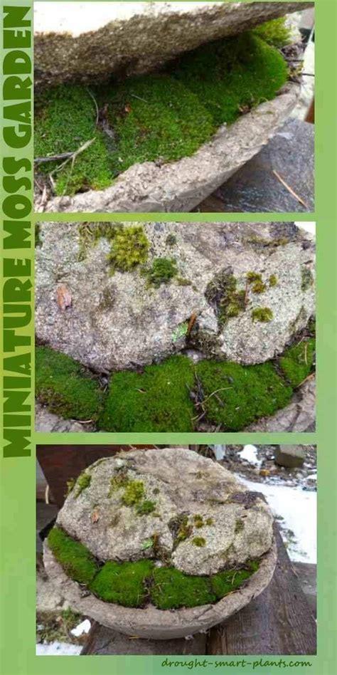 Mini Japanese Rock Garden Miniature Japanese Garden A Bowl Some Moss And A Rock