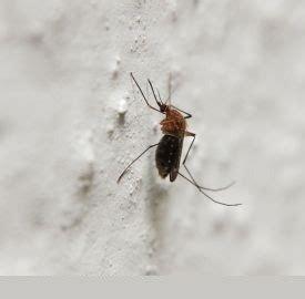 trappola per zanzare fatta in casa zanzare trappola 2 trappola zanzare fatta in casa ecco