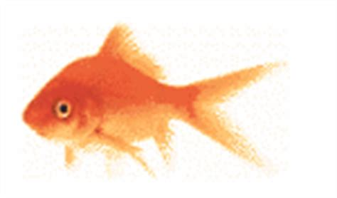 cara membuat gif image online dipraz blogspot cara membuat umpan untuk ikan mas