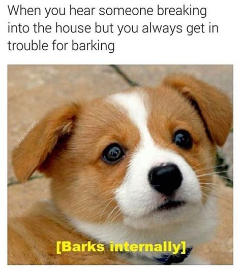10 Dog Meme - 10 of the happiest dog memes ever that will make you