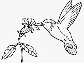 hummingbird coloring pages hummingbird coloring pages