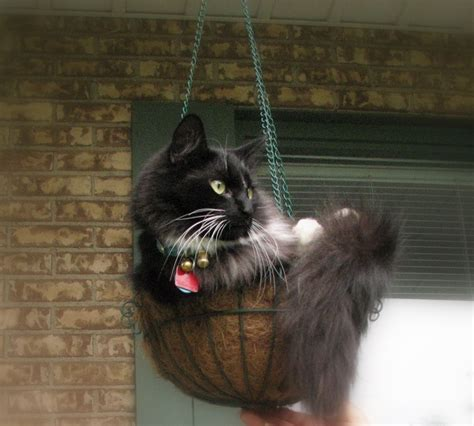 cat swing 47 best ideas about cat enclosures on pinterest geodesic