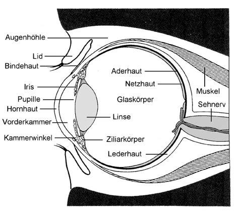 Beschriftung Des Auges by Schematischer Aufbau Des Auges