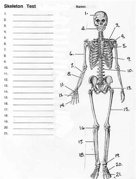 printable anatomy quiz human skull anatomy quiz
