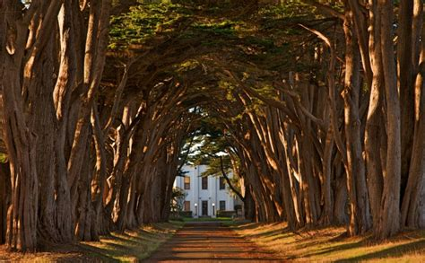 Wisteria Tunnels Tokyo by Incredibly Magical Tree Tunnels Worldwide You Must Walk