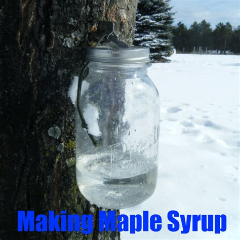maple syrup the backyard pioneer