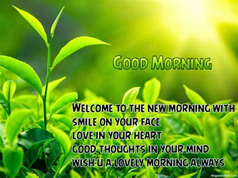 morning quotes pictures morning beautiful quotes with pictures morning cards