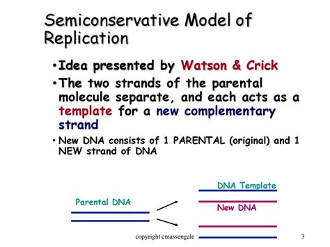 Dna And Replication презентация онлайн What Acts As The Template In Dna Replication