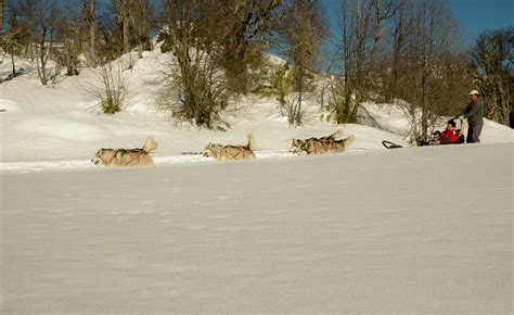 niños riendo imagenes paseo en trineo de nieve por moquehue