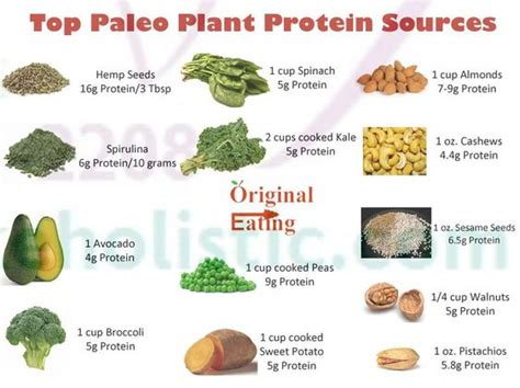 protein heavy foods the world s catalog of ideas