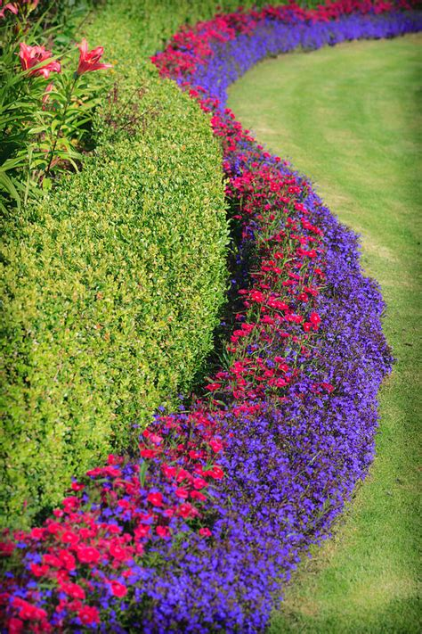 flowers and hedge photograph by mike penney
