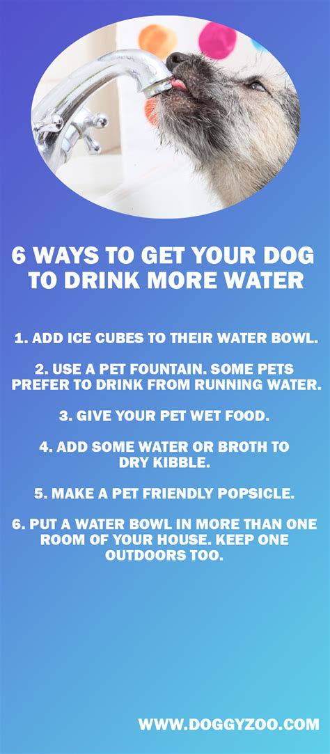 how to get your to drink water 6 ways to get your to drink more water doggyzoo comdoggyzoo