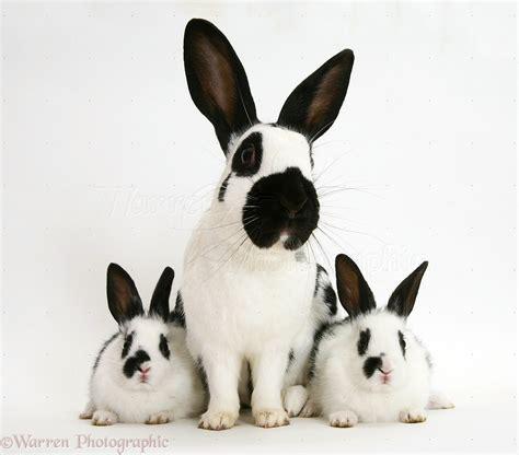 black and white rabbit wallpaper 14769 black and white rabbits background jpg rabbit