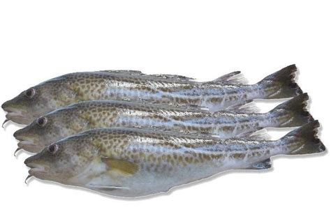 Salmon Fillet Norwey Frozen 200gr Premium salmon fillet netherlands products netherlands salmon