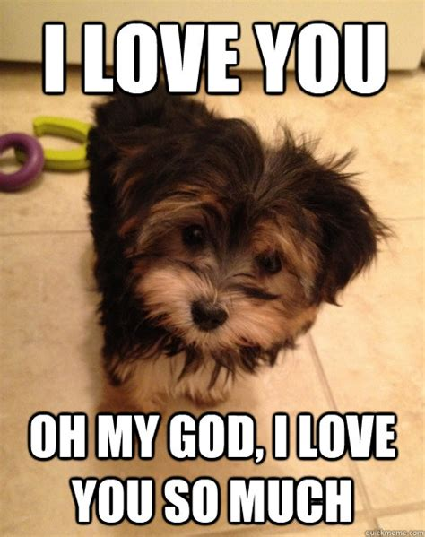 Meme Love You - i love you puppy meme www pixshark com images