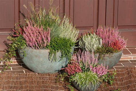 Decoration Of Home window boxes and trays gardengirls 174