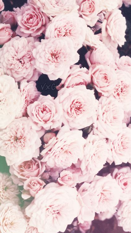 iphone 6 wallpaper girly tumblr iphone 6 backgrounds tumblr google search