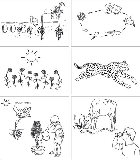 Characteristics Of Living Things Worksheet by Living Non Living Teachers Of India