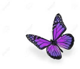 download free beautiful butterfly images with flowers hd