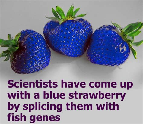 Strawberry Blue fact check are blue strawberries real