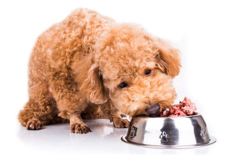food diet for dogs proteins in food diets for dogs petmd