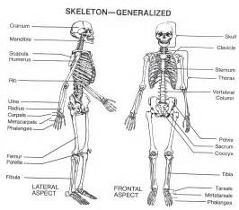 Anatomy And Physiology  Human Charts sketch template