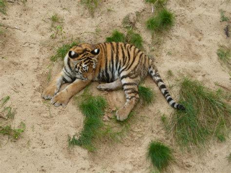 zoologischer garten oder tierpark berlin ausfl 252 ge mit kindern berlin brandenburg tipp zoo