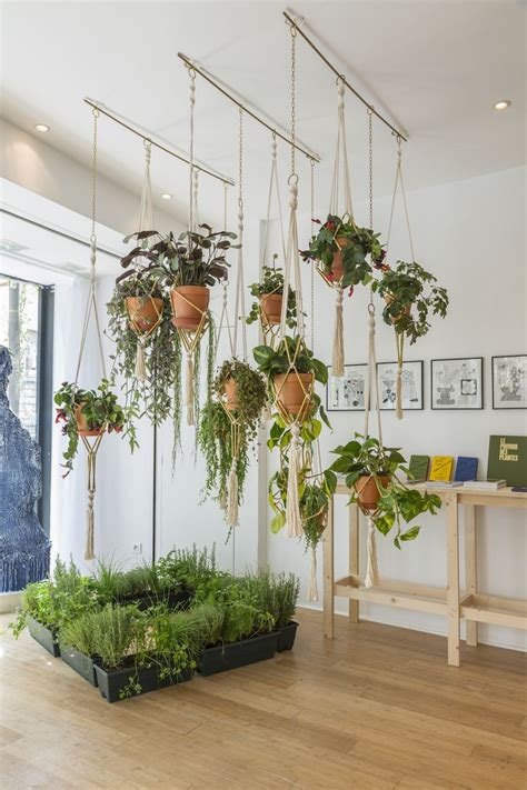 plant wall hangers indoor best 25 indoor hanging plants ideas on