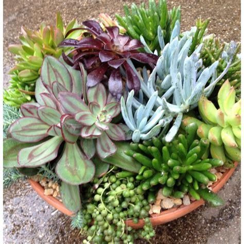 Succulent Dish Garden Ideas Beautiful Succulent Dish Garden By Carrie Succulent Container Gardens Wreaths Walls