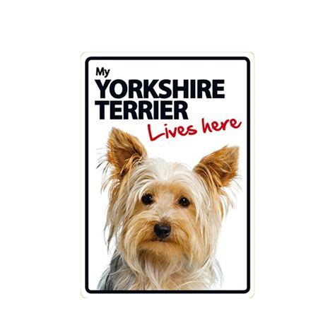 yorkie rate yorkie lives here