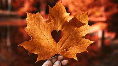 autumn leaf love heart  wallpapers hd wallpapers id