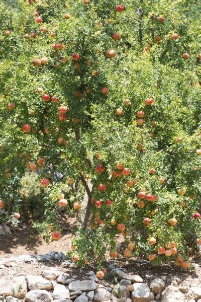 Tree Trimming Ideas 25 Best Ideas About Tree Pruning On Pruning