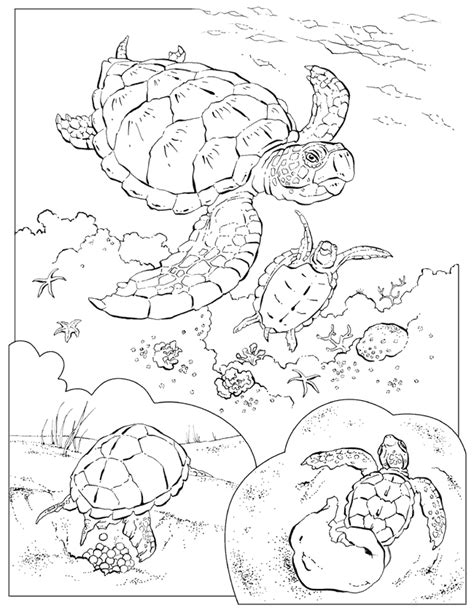 coloring page of a sea turtle coloring pages of sea turtles